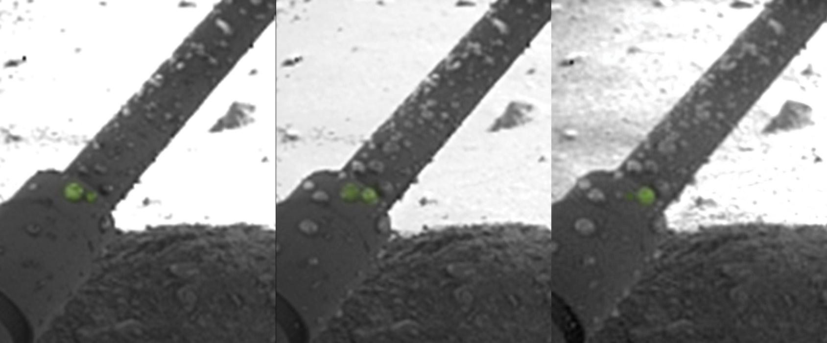 Globules of liquid saltwater were pictured on the leg of the Phoenix Mars Lander. NASA/JPL-Caltech/University of Arizona/Max Planck Institute