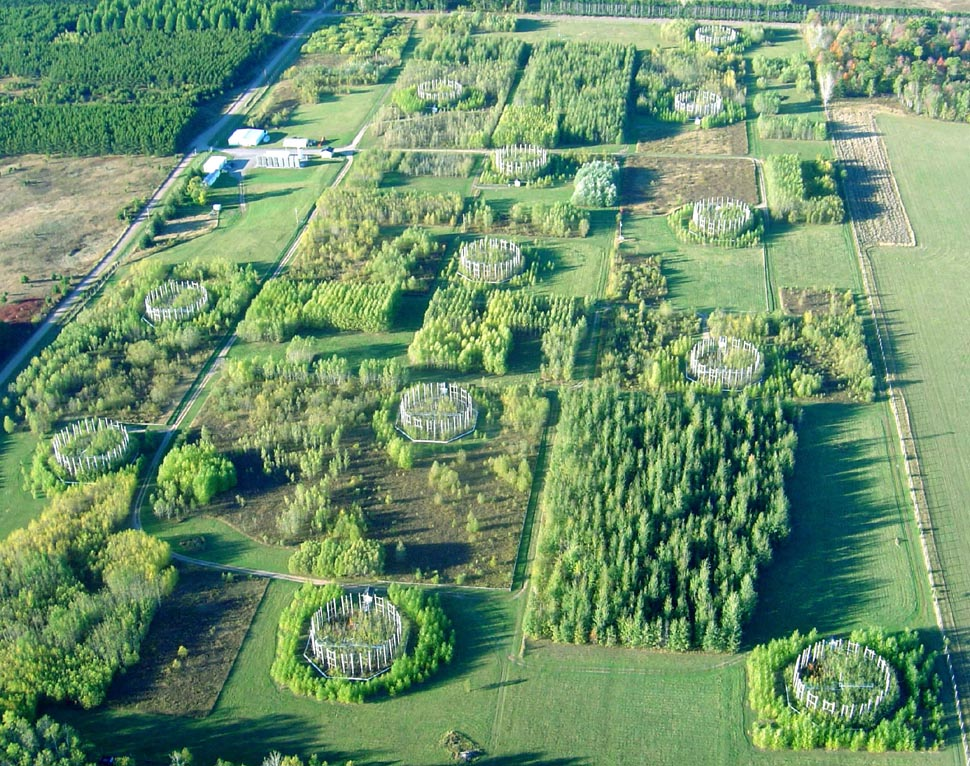 An aerial view of the 38-acre experimental forest in Wisconsin where U-M researchers and their colleagues continuously exposed birch, aspen and maple trees to elevated levels of carbon dioxide and ozone gas from 1997 through 2008. Credit: David Karnosky, Michigan Technological University