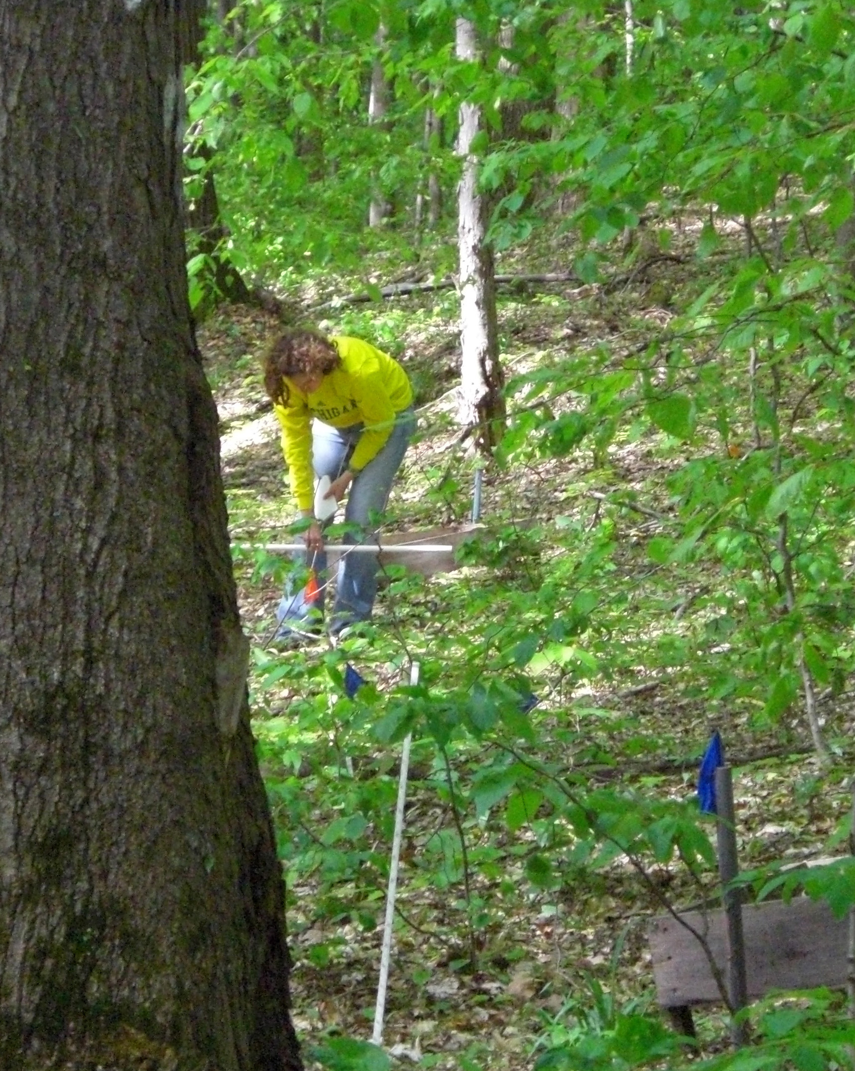 A researcher at one of four sugar maple research sites in Michigan. Photo courtesy of Sierra Patterson and Alan Talhelm