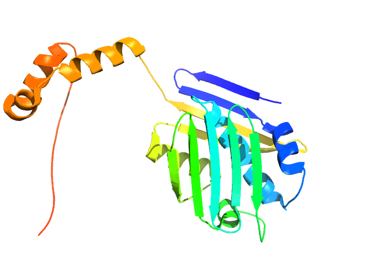 Illustration depicting the three-dimensional structure of the stress-specific protein Hsp33. Image credit: Ursula Jakob