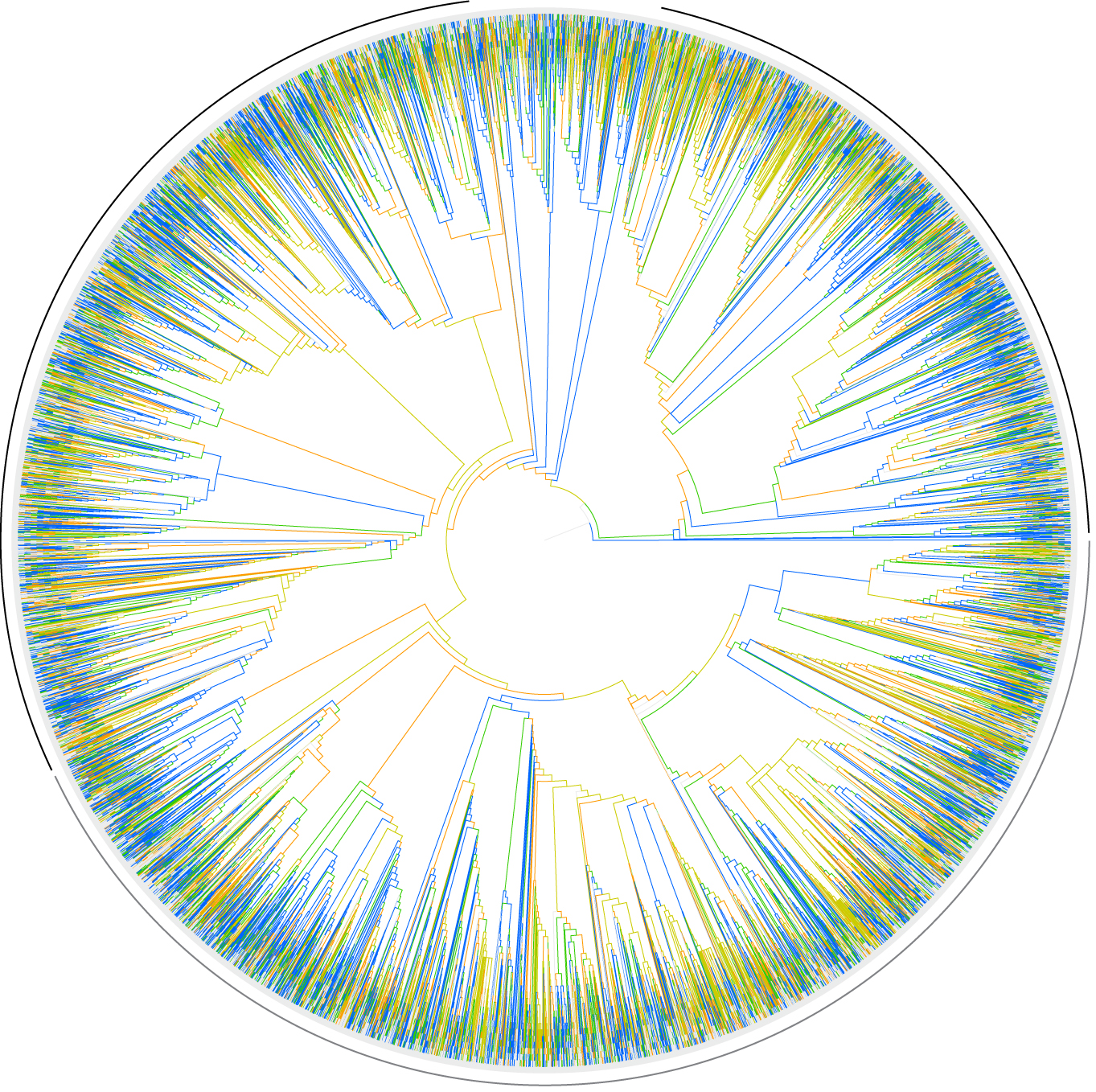 This evolutionary tree shows the relationships between more than 33,000 species of flowering plants. Trees like this will be pieced together to form an evolutionary tree of all named species of animals, plants and microorganisms as part of the Open Tree of Life project. Image credit: Stephen Smith