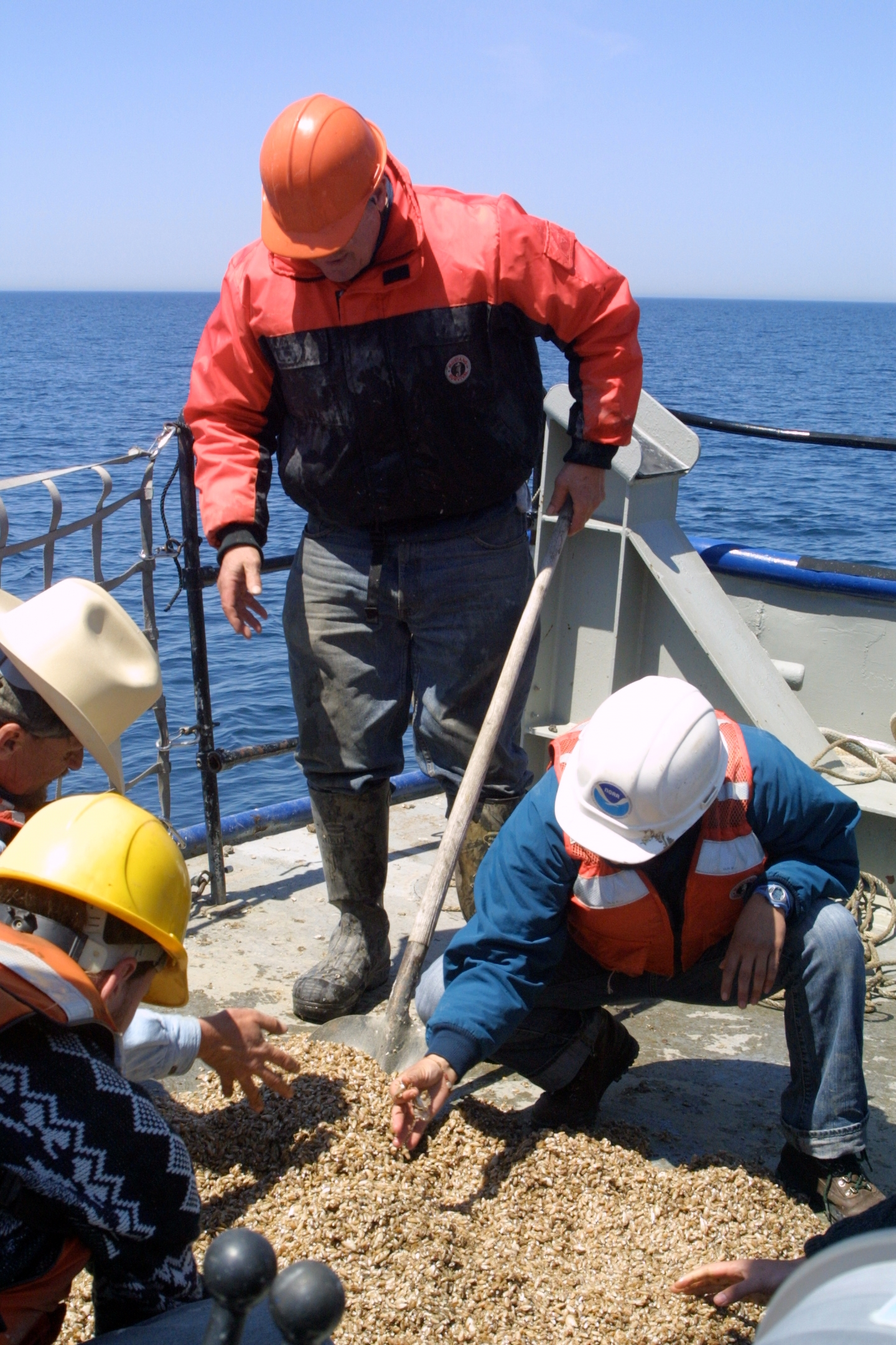 U-M researchers examine a load of quagga mussels pulled from the bottom of Lake Michigan during a 2009 voyage. Photo by Jim Erickson