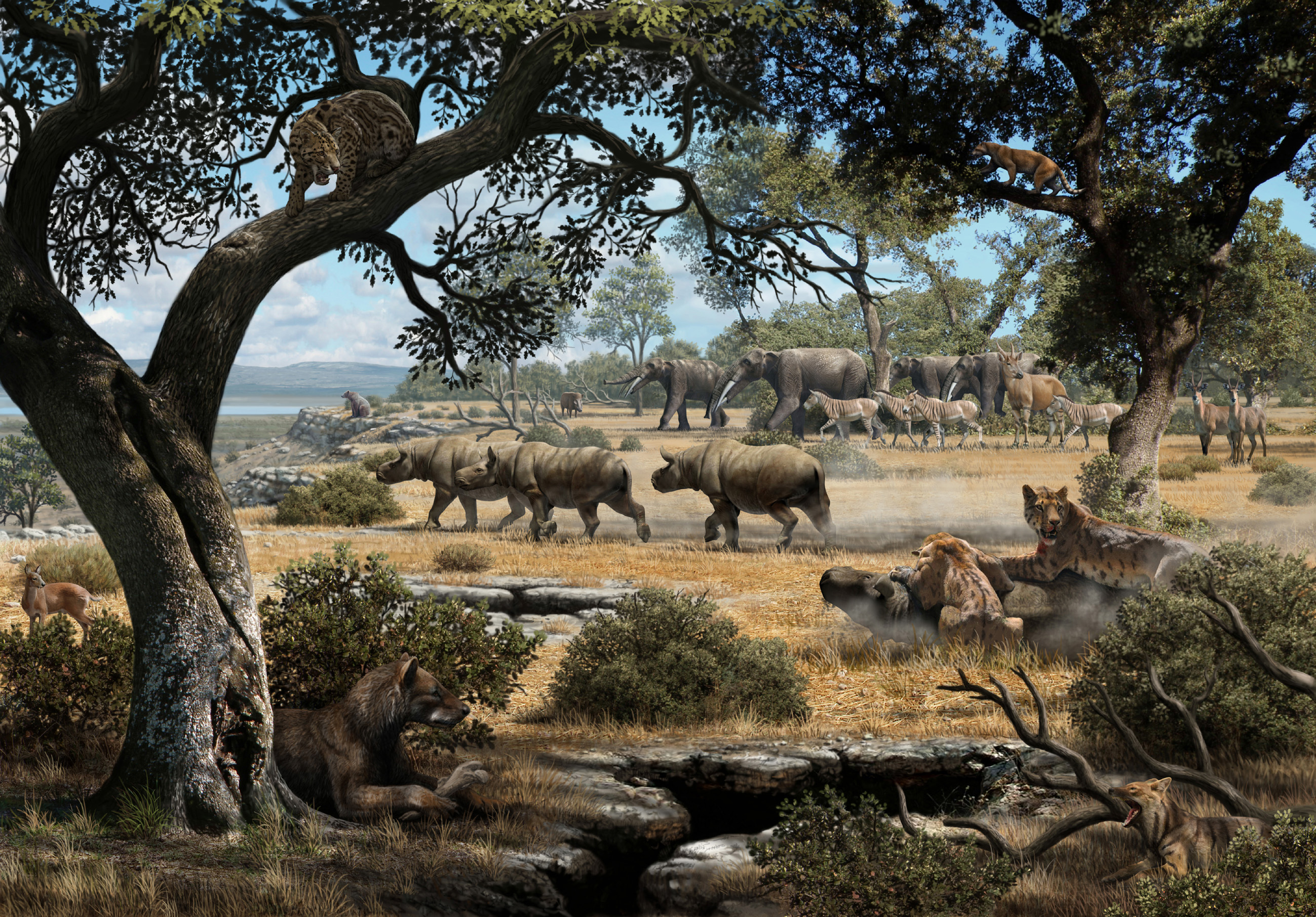 This illustration depicts how the region of Cerro de los Batallones in central Spain likely looked 9 million years ago. Researchers led by the University of Michigan have used carbon records in the teeth of fossilized predators to shed light on how saber-toothed cats and bear dogs shared space and prey during the late Miocene period. Image credit: Mauricio Antón