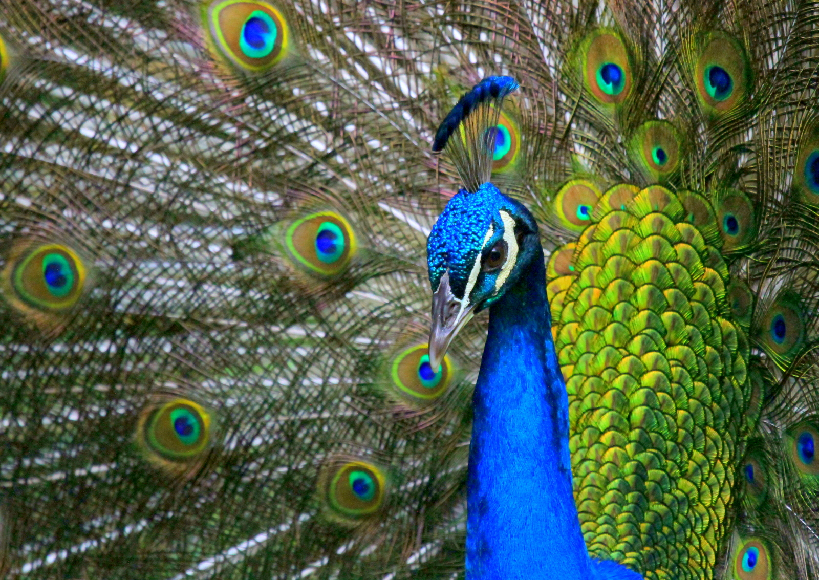 Next-gen e-readers: Improved \'peacock\' technology could lock in ...