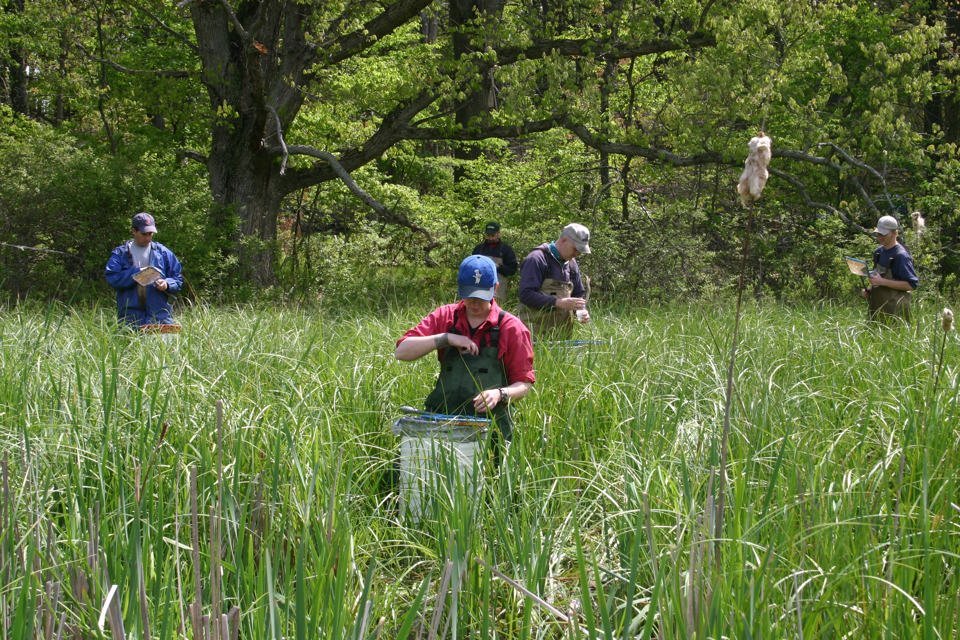 Field crews collecting tadpoles at U-M's E.S. George Reserve in Pinckney, Mich. Image credit: Michael Benard