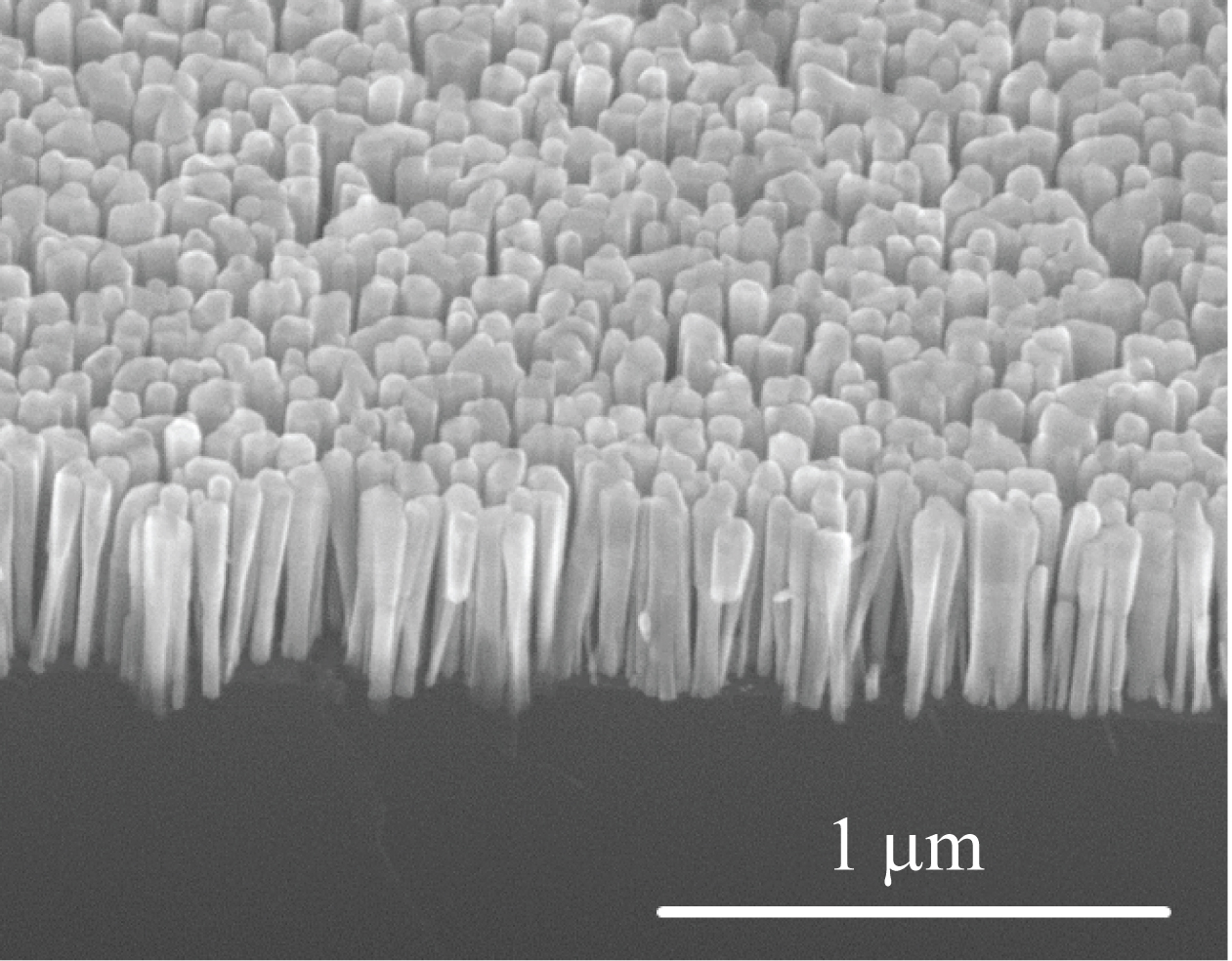 Nanowires growing on silicon. Courtesy of Pallab Bhattacharya