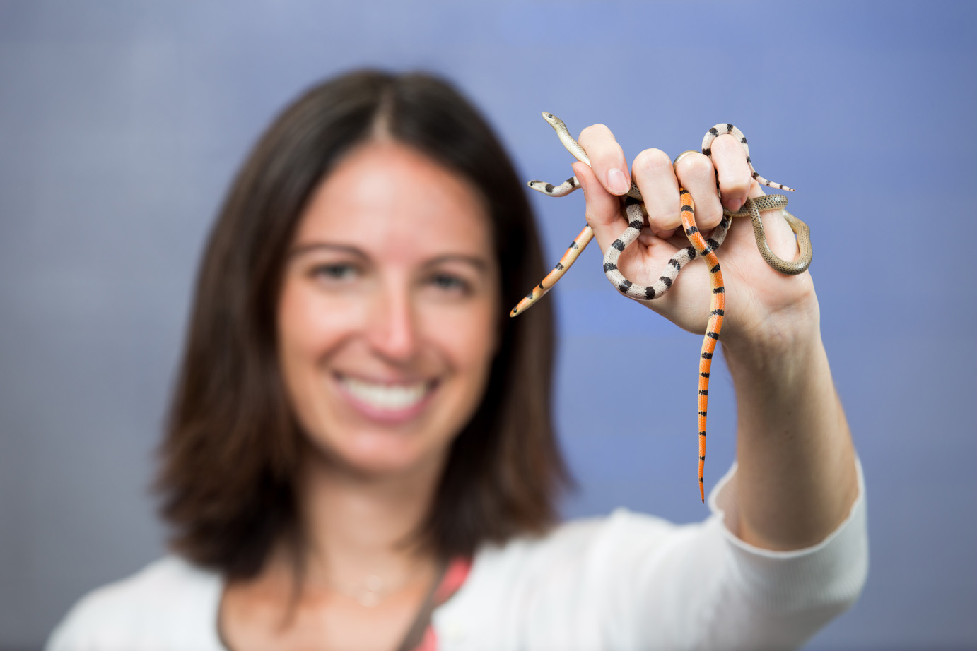 U-M evolutionary biologist Alison Davis Rabosky holding several ground snakes, a non-venomous species that displays four strikingly different color patterns. Rabosky is breeding ground snakes in her lab to understand the genetics behind color variation. Image credit: Eric Bronson, Michigan Photography