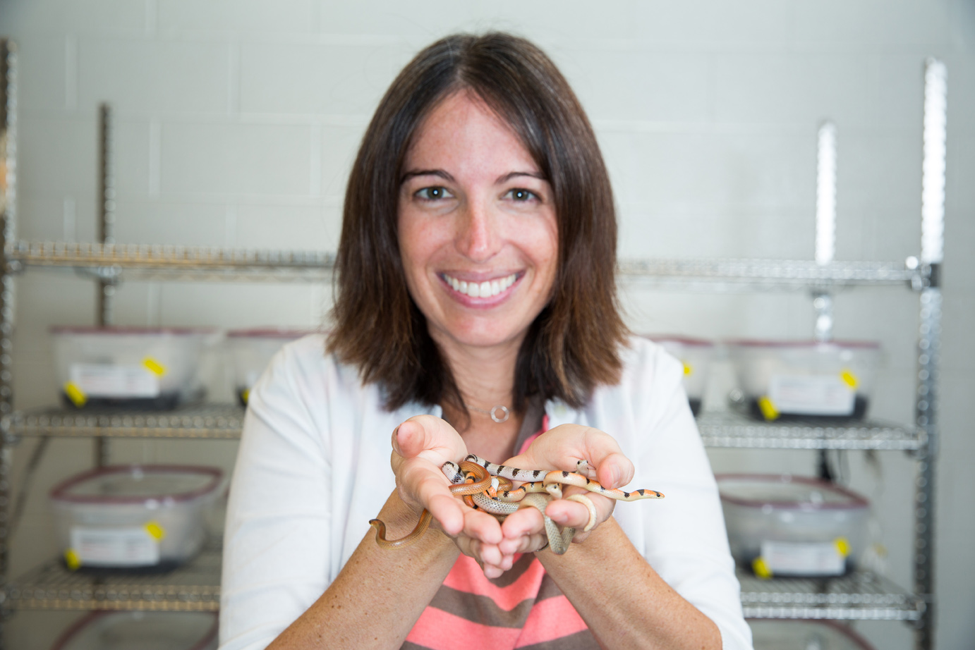 U-M evolutionary biologist Alison Davis Rabosky with a handful of ground snakes. The non-venomous snakes are common in the central and western United States, as well as in Mexico. Image credit: Eric Bronson, Michigan Photography
