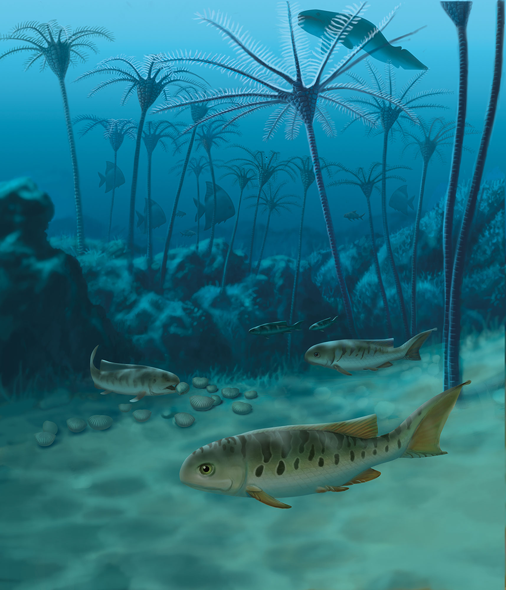 Styracopterus, a later relative of Fouldenia that appeared alongside a host of fish with new body forms about 338 million years ago, is shown at a near-shore reef not far from the site where the Fouldenia fossils were collected. Painting by John Megahan.