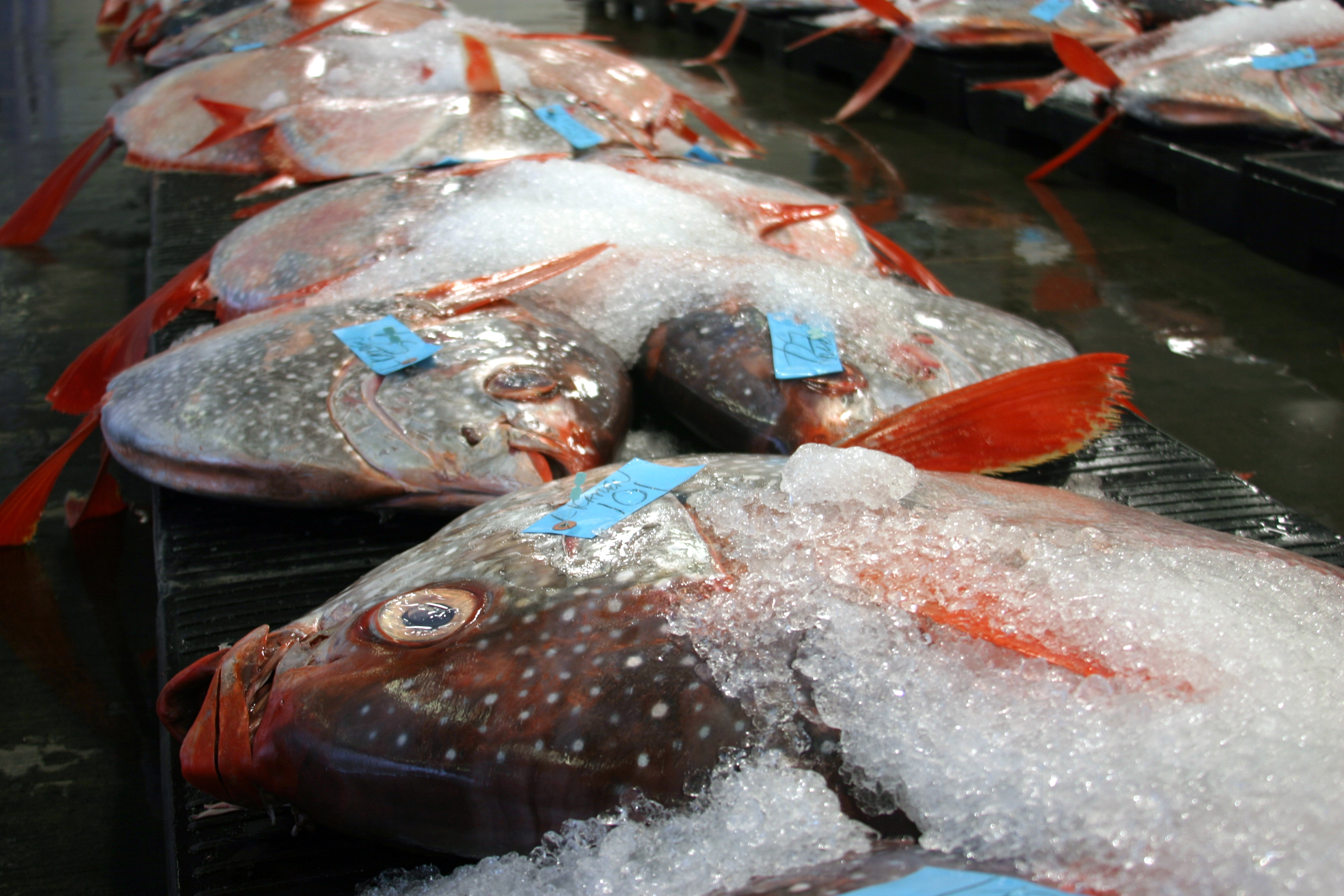 Opah, also called moonfish, at a fish auction in Hawaii. Opah were one of nine fish species analyzed in a new study that looked at how mercury gets into open-ocean fish and why the levels vary with depth. Image credit: C. Anela Choy