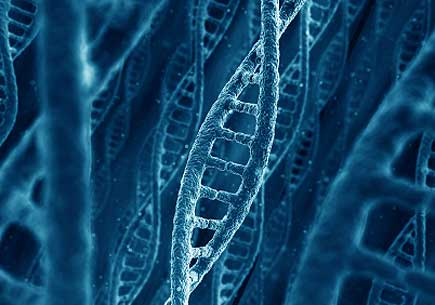 DNA stucturees. (stock image)