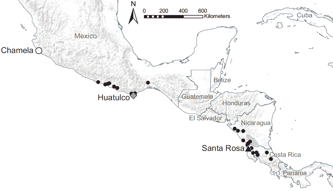 University of Michigan ecologist Elizabeth G. Pringle and her colleagues studied mutually beneficial interactions between Ecuador laurel trees and Azteca ants at 26 study sites in seasonally dry tropical forests along the Pacific coast of southern Mexico and Central America. The coastal sites span 1,426 miles, with annual precipitation increasing fourfold from the northernmost to the southernmost site. Additional work was conducted at three of the sites: Chamela, Huatulco and Santa Rosa. Image credit: Elizabeth G. Pringle