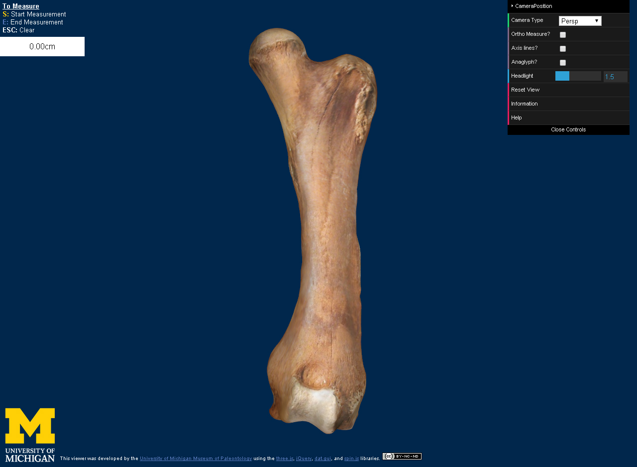 3-D digital model of a femur (thighbone) from the Buesching mastodon as it appears on the U-M Online Repository of Fossils website. Courtesy of the University of Michigan Museum of Paleontology.