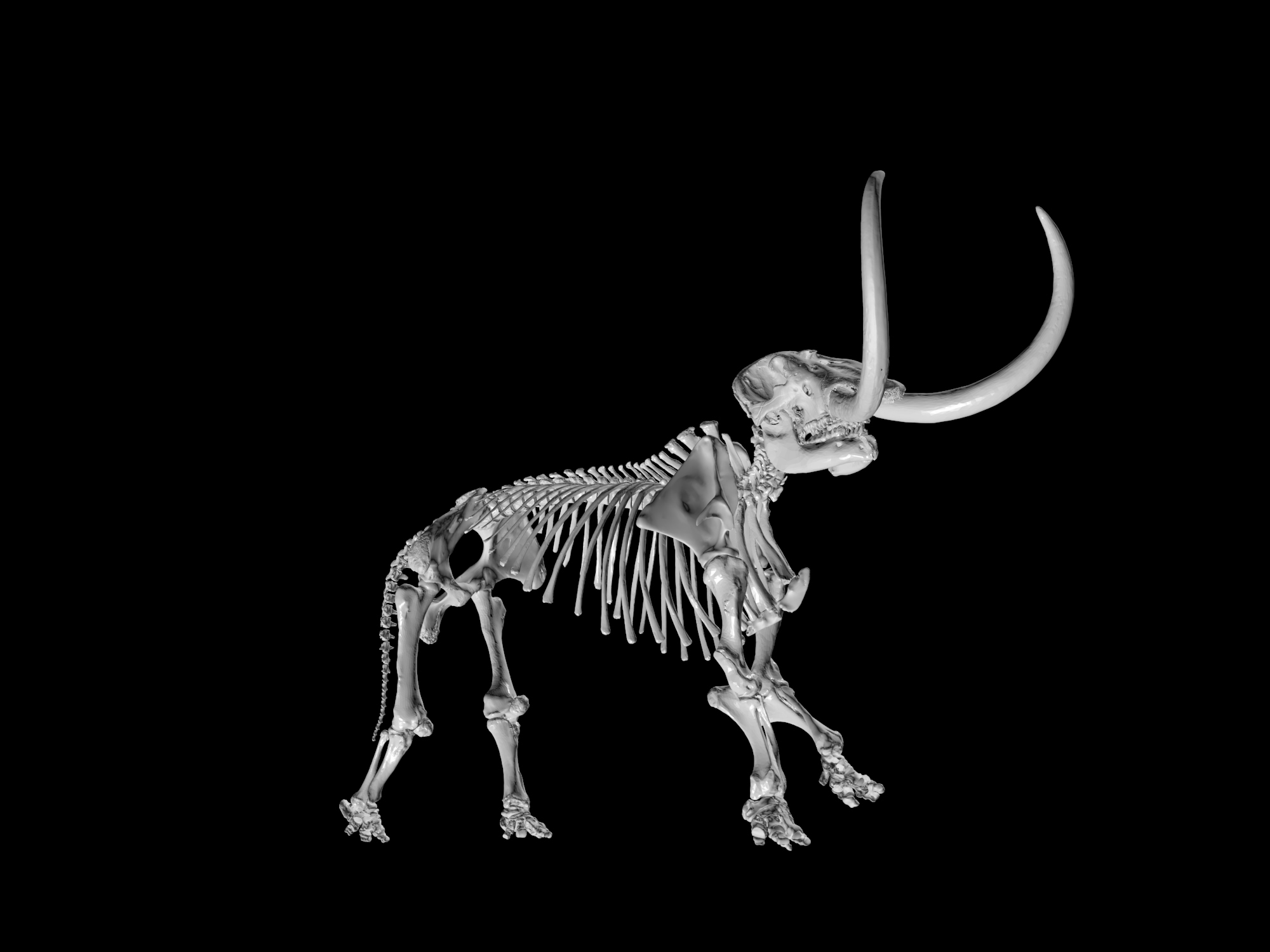 3-D digital skeleton of an adult male mastodon, part of the new University of Michigan Online Repository of Fossils website. A mounted cast of the Buesching mastodon skeleton, which is on display at the U-M Museum of Natural History, was used to align the nearly 250 bones in the 3-D digital skeleton. Image courtesy of the University of Michigan Museum of Paleontology.