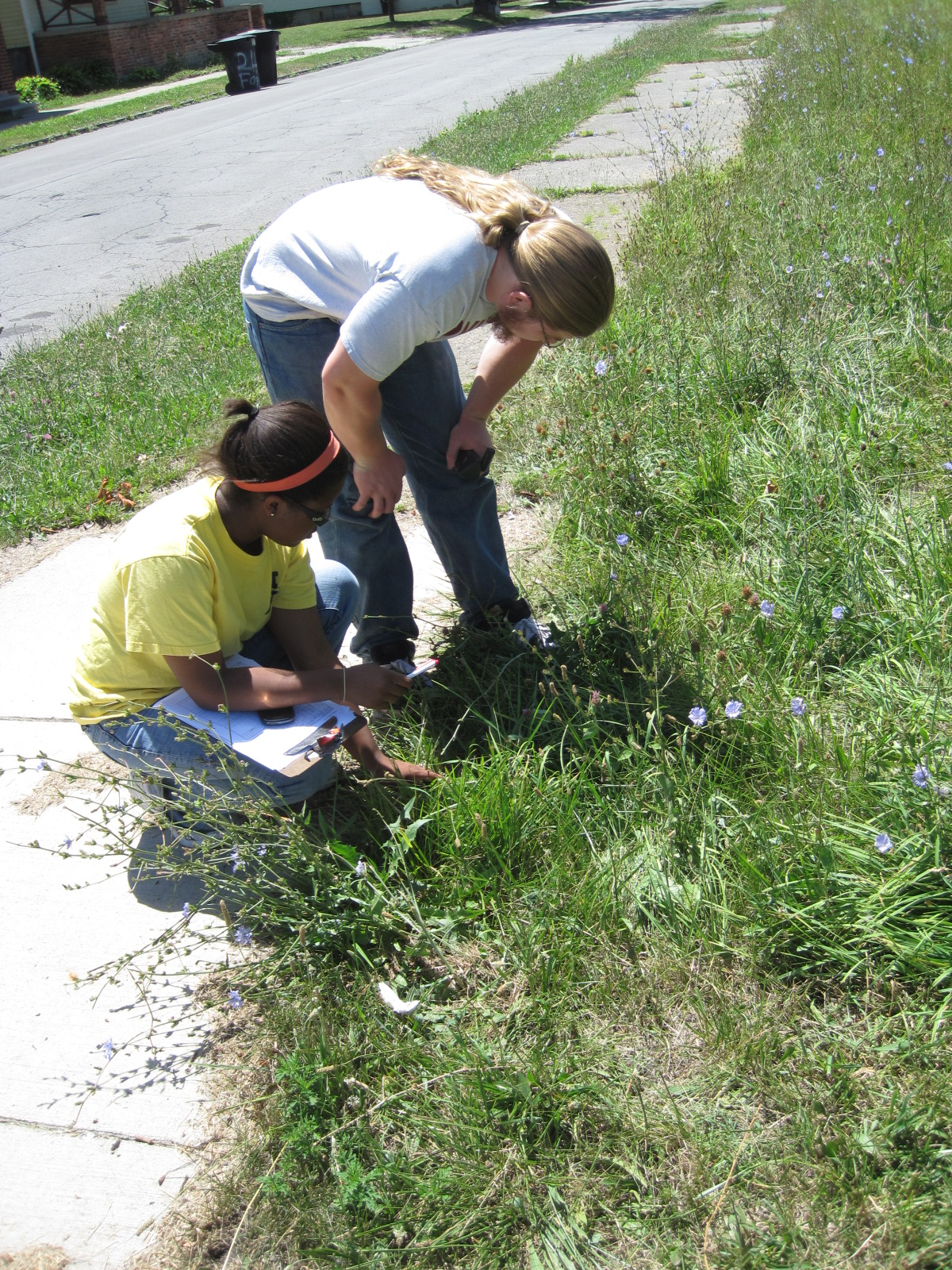 U-M researchers Tiffany Carey (left) and Max Ramsay count ragweed plants on a vacant lot in Detroit. Image credit: Daniel Katz