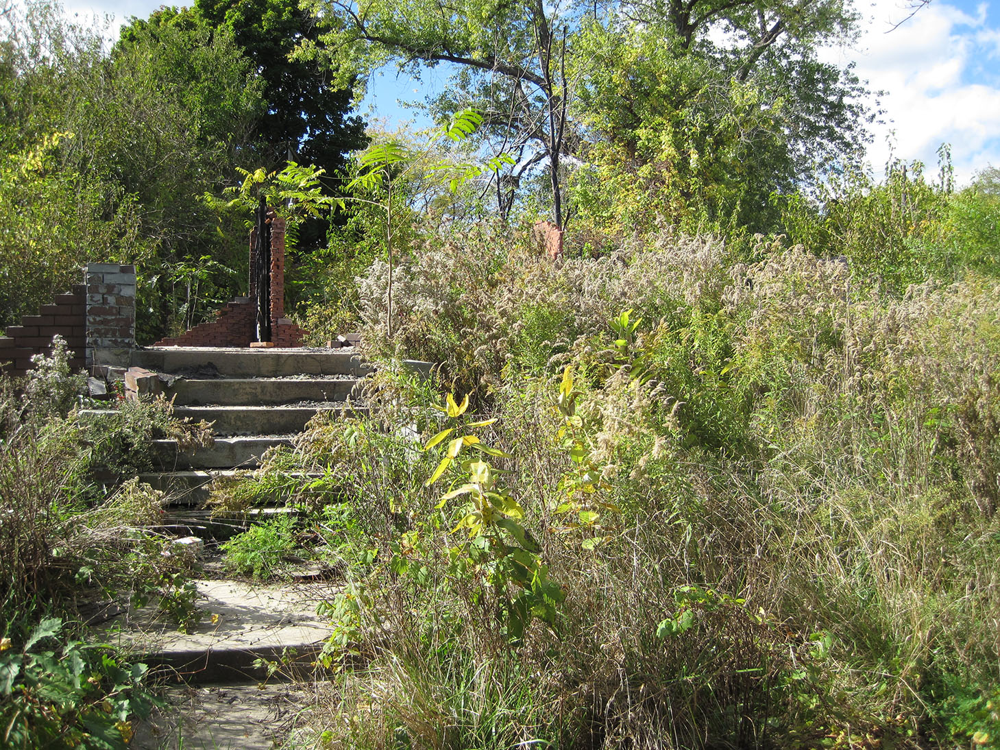 A walkway and steps on a vacant lot in Detroit. Image credit: Daniel Katz