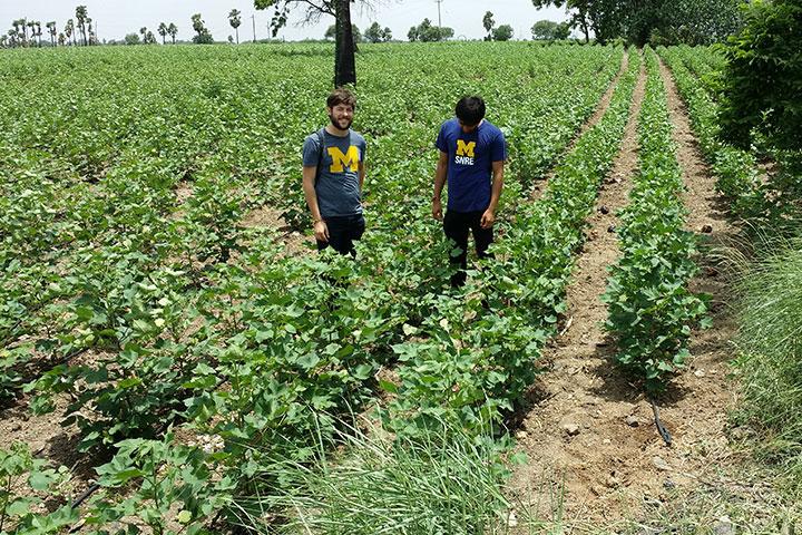 University of Michigan students and Dow Distinguished Award for Interdisciplinary Sustainability winners John Monnat, left, and Adithya Dahagama in a cotton field in South India. Image credit: Umamaheshwar Dahagama