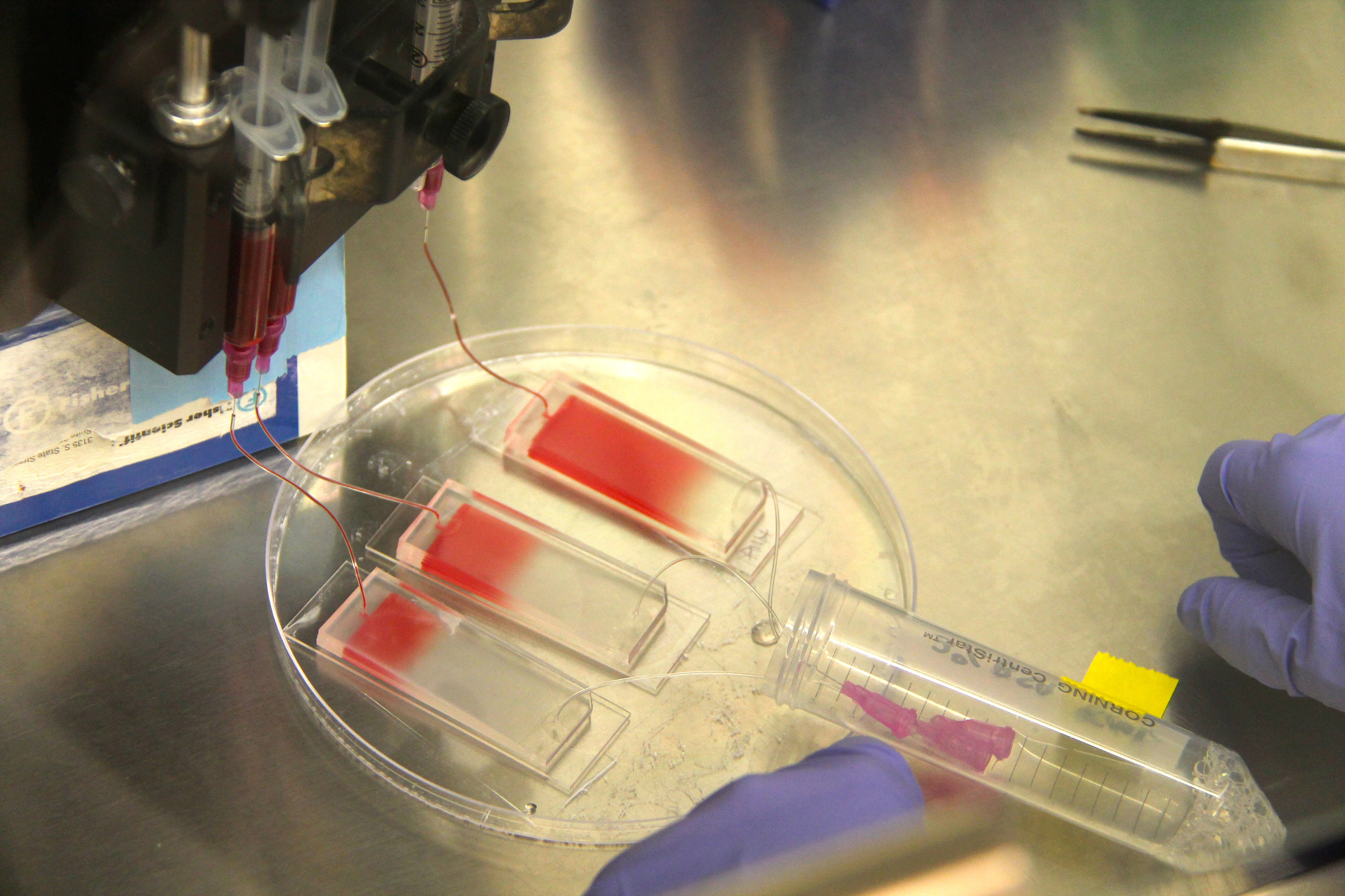 A blood sample is pumped into a microfluidic chip as part of the microfluidic co-culture process. Image credit: Jennifer Zhuo Zhang