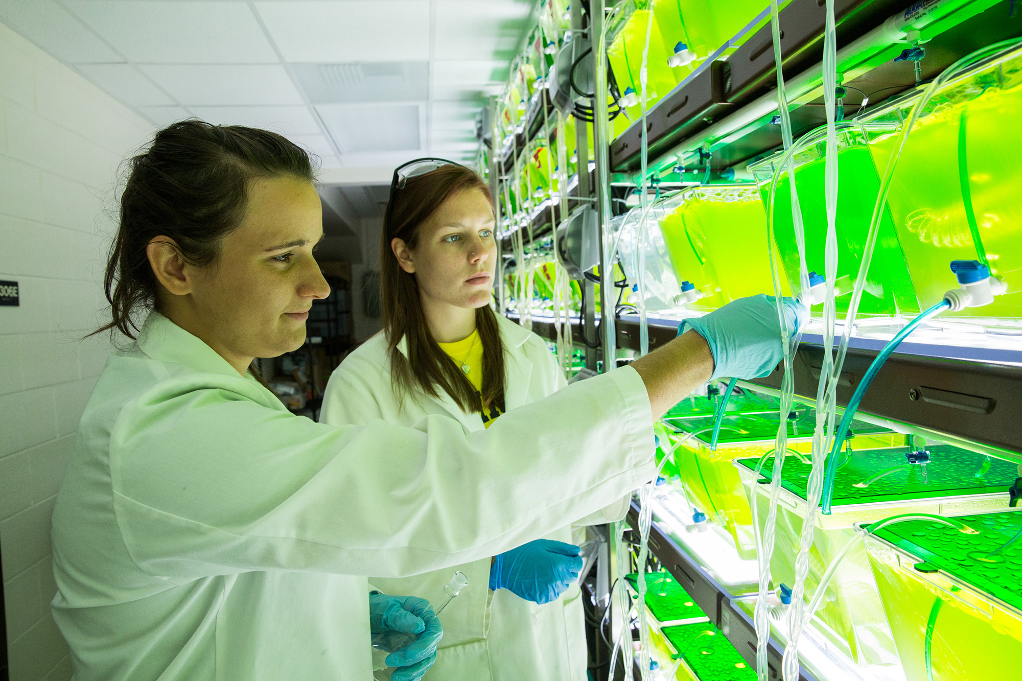 Two University of Michigan undergraduates sample algae from an experiment that will determine if species diversity can enhance the production of algal biofuels. Image credit: Bradley J. Cardinale