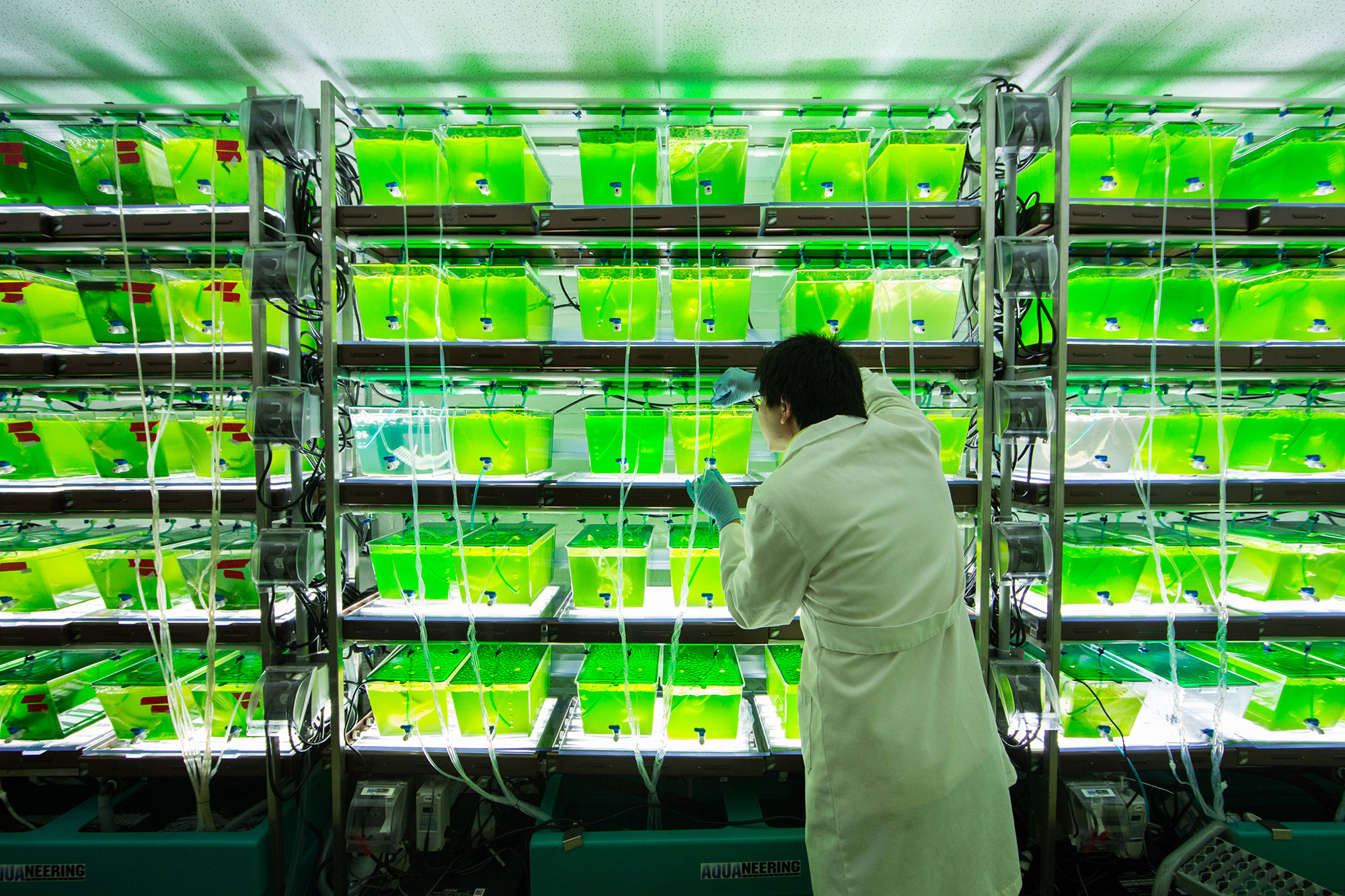 A University of Michigan undergraduate samples algae from an experiment that will determine if species diversity can enhance the production of algal biofuels. Image credit: Bradley J. Cardinale