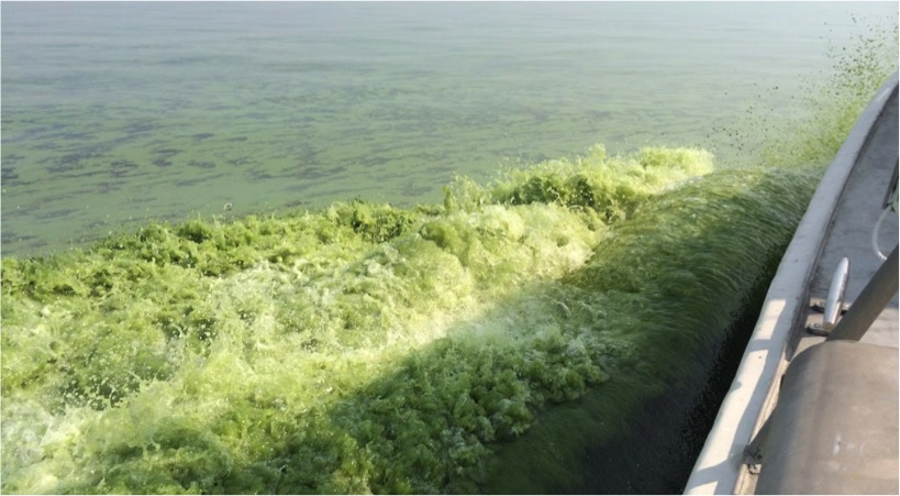 Cyanobacteria and algae color Lake Erie waters pea-soup green in this photo taken on a research vessel July 21, 2014. Image credit: Sarah Page