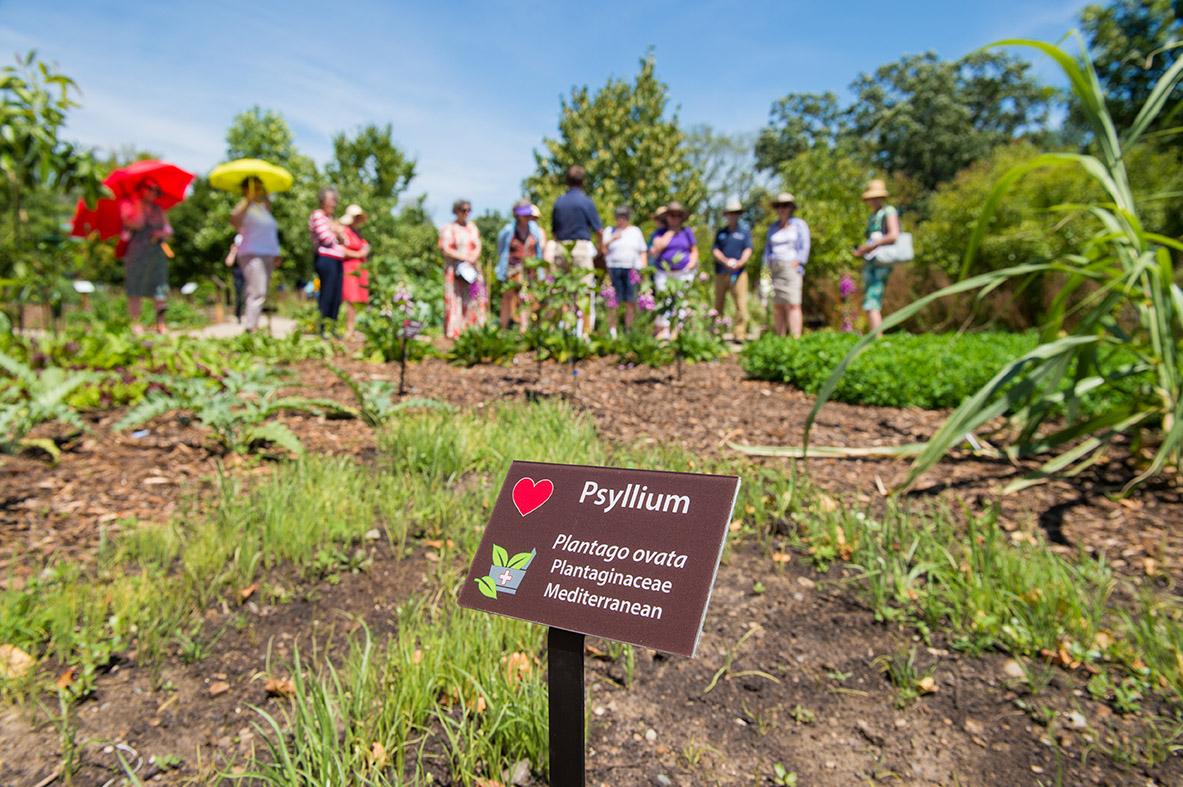 Medicinal Garden, University of Michigan Matthaei Botanical Gardens. Image credit: Austin Thomason