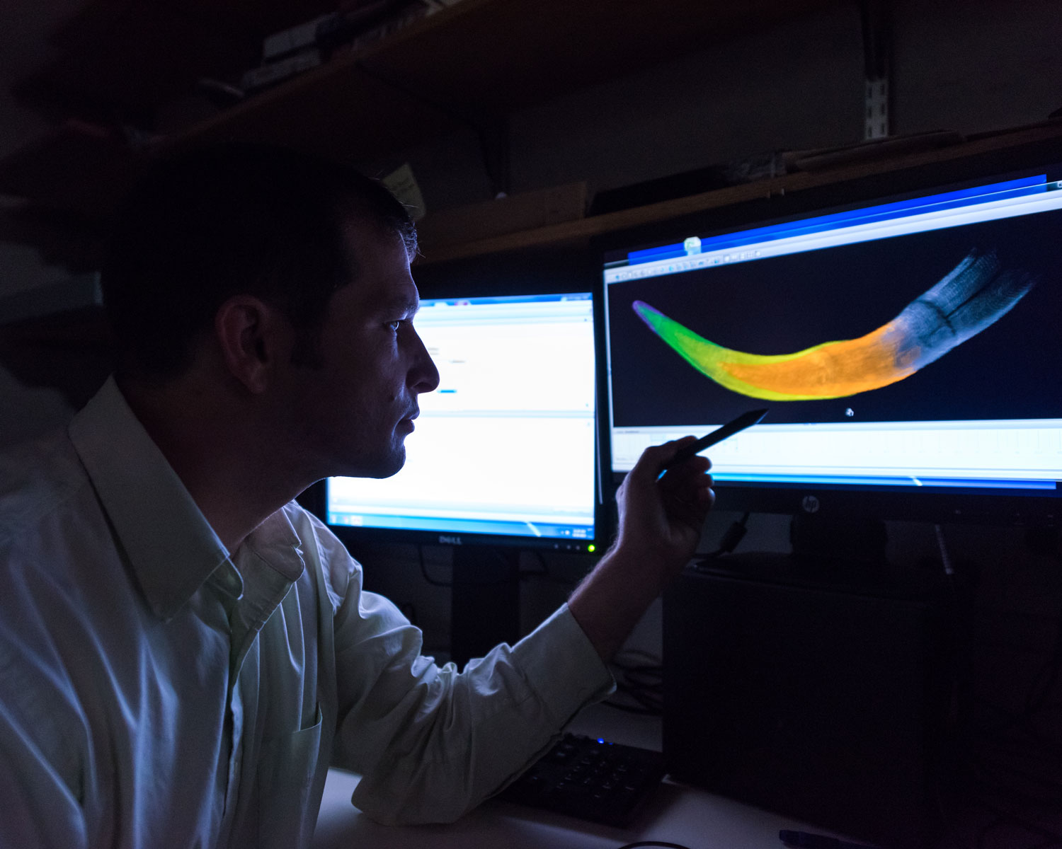 U-M doctoral student Michael Cherney views a colorized CT scan image of a juvenile woolly mammoth tusk. The various colors denote different years of growth.