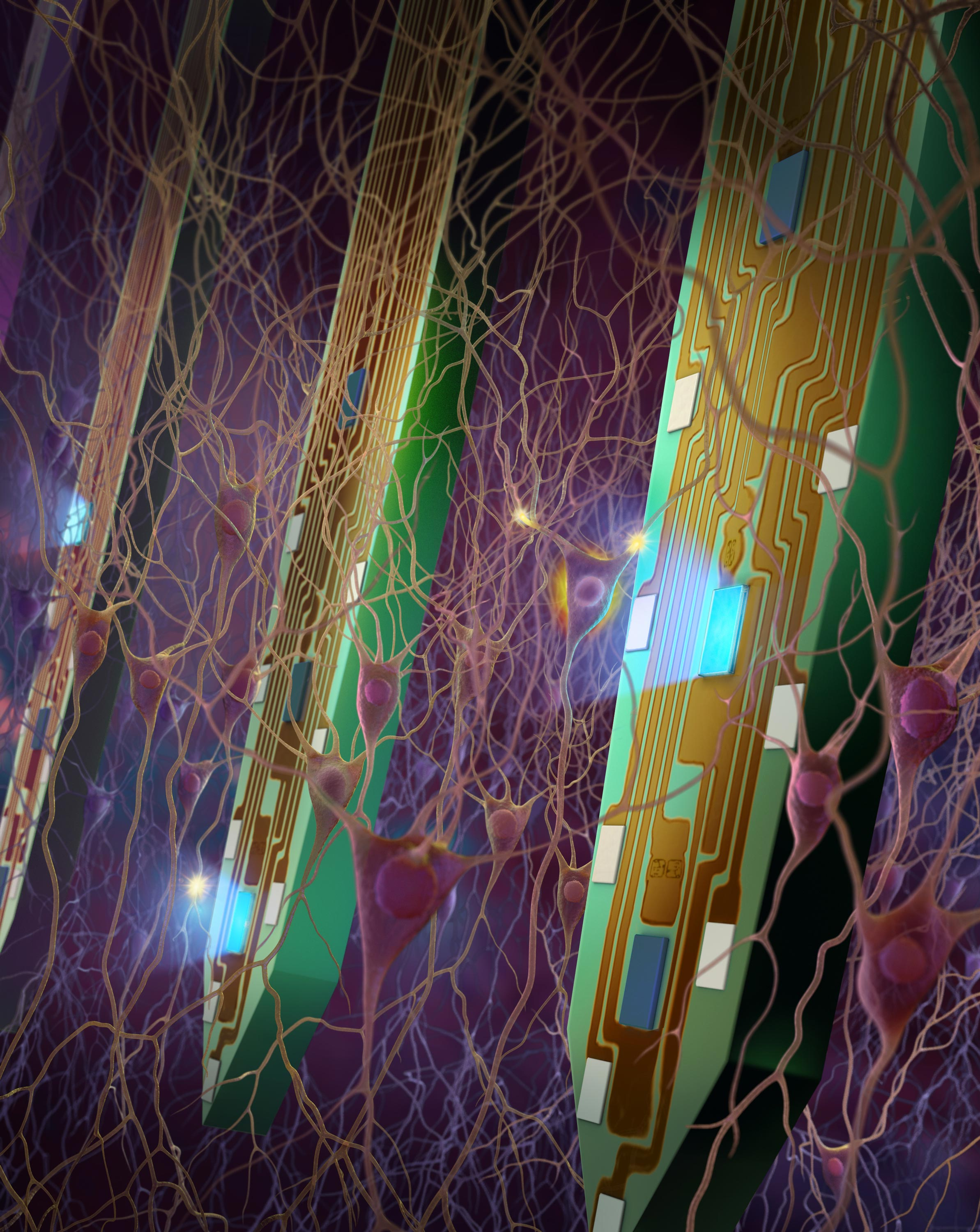 Neural probes developed at the University of Michigan are helping researchers understand the brain's circuitry. The tines of the probe are just under a tenth of a millimeter wide. Equipped with minuscule LED lights and electrodes, each tine can stimulate and measure about a hundred individual neurons. Image credit: Fan Wu