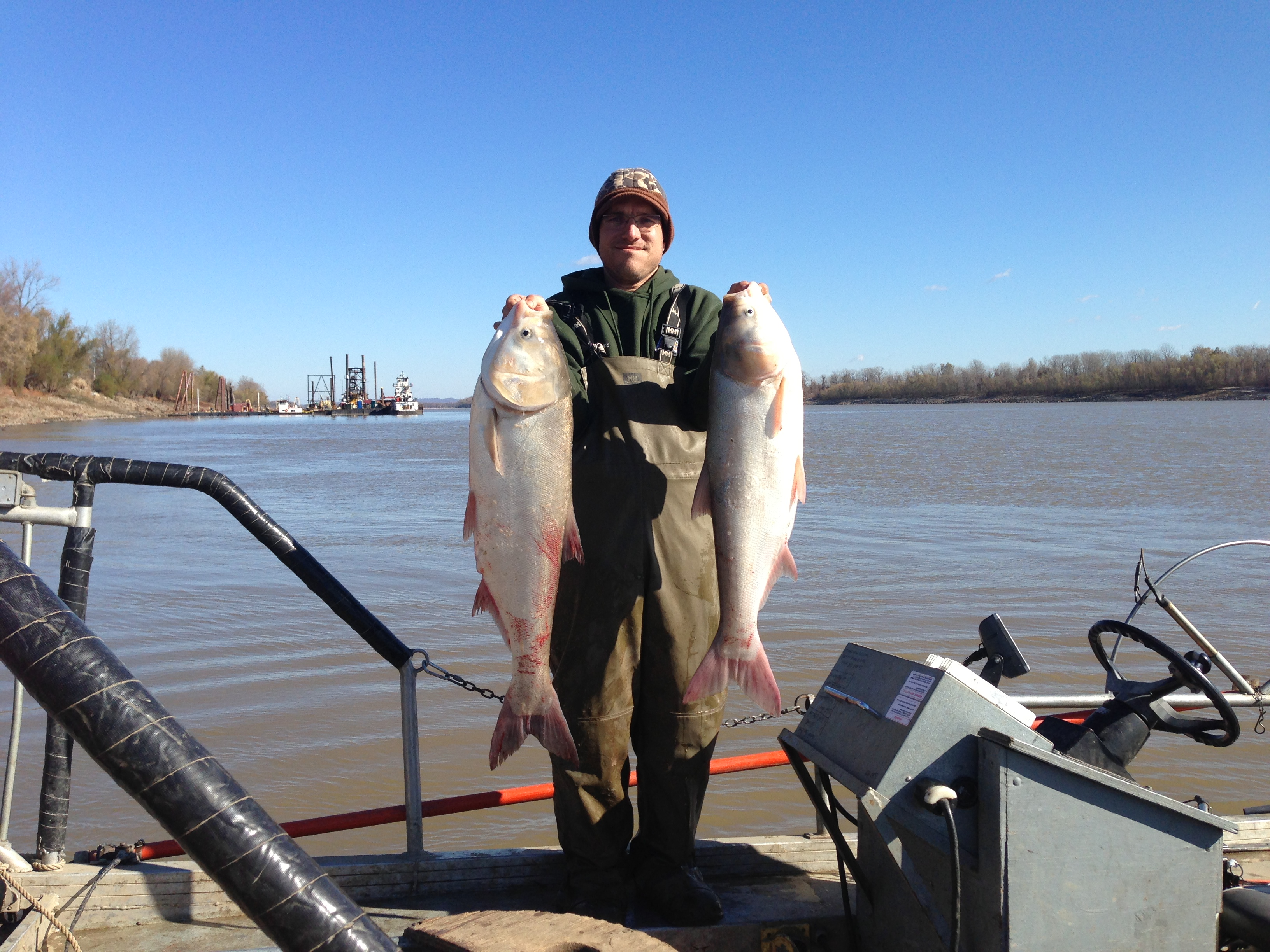 Two silver carp on the Mississippi River in Missouri. Image credit: Sara Tripp/Missouri Department of Conservation