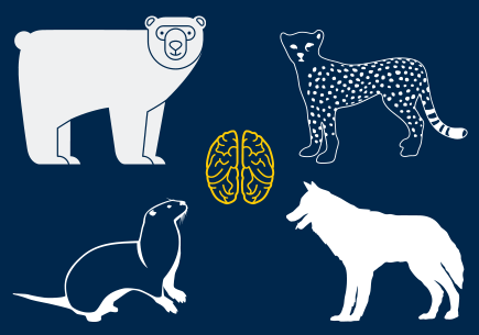 Illustration of a bear, a cheetah, a wolf, and a meerkat with a brain in the center.