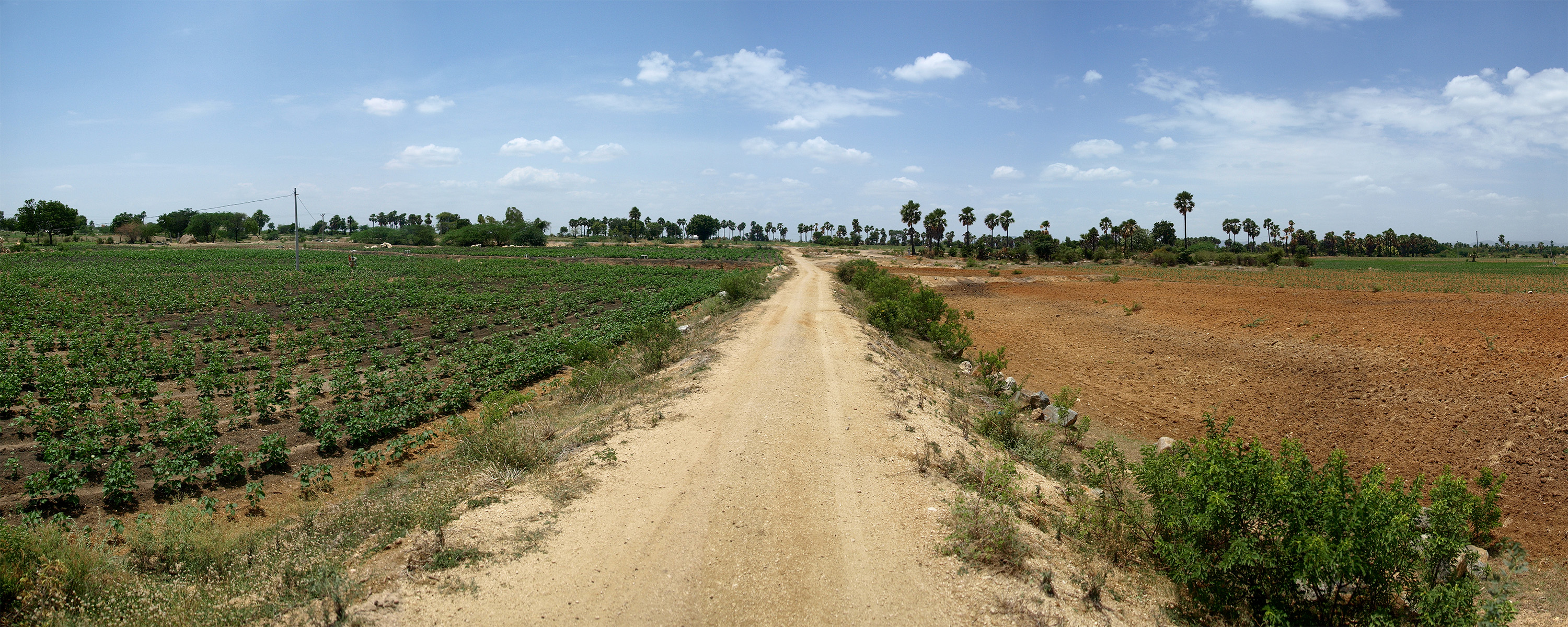 The farm field on the left has been treated with silt. Image credit: John Monnat