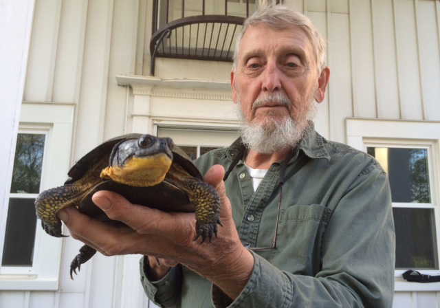 Researcher Justin Congdon with an 83-year-old Blanding's turtle at U-M's E.S. George Reserve. Image credit: Roy Nagle