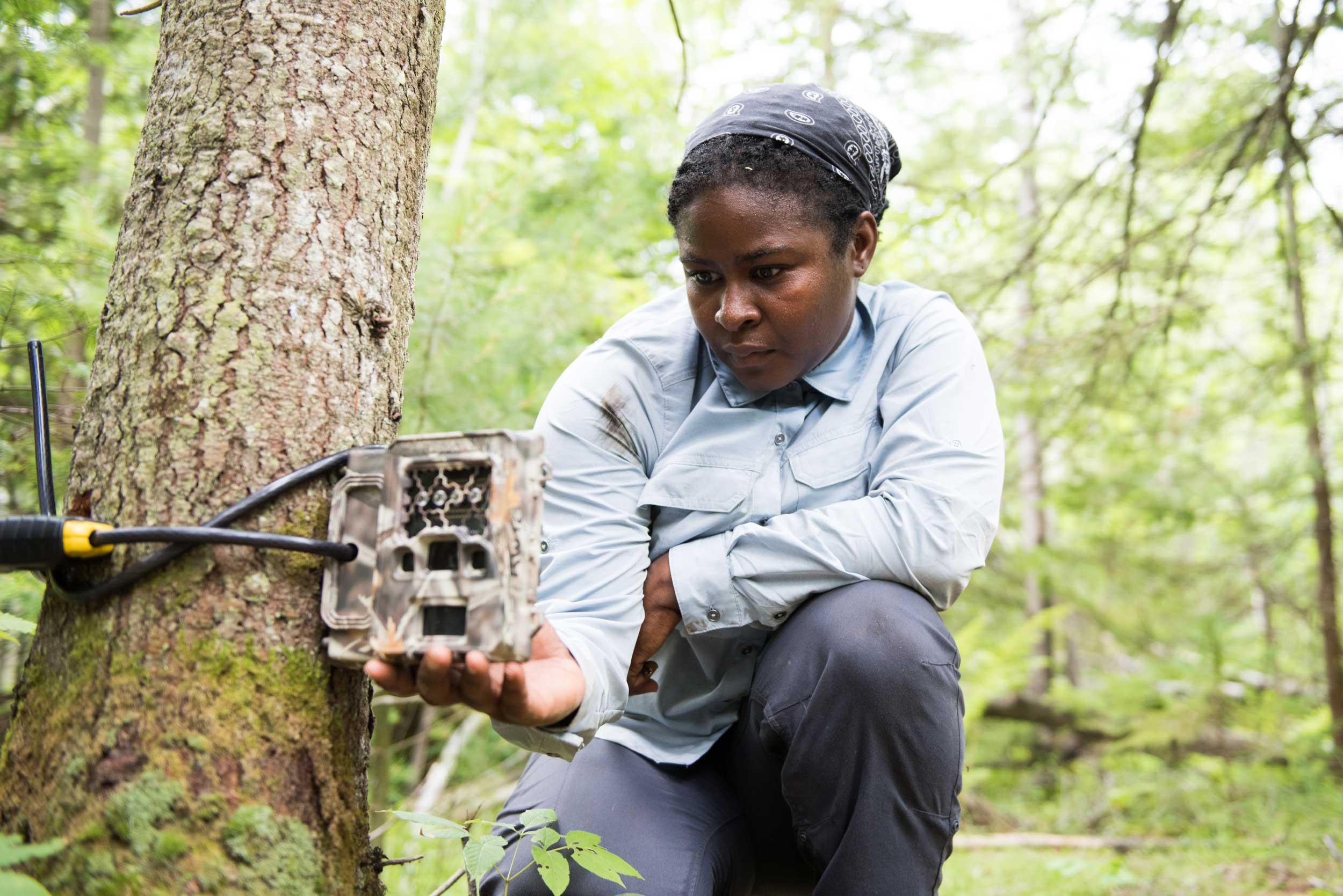 "U-M wildlife ecologist Nyeema Harris completes the installation of a ""camera trap"" at the U-M Biological Station. Image credit: Eric Bronson, Michigan Photography"