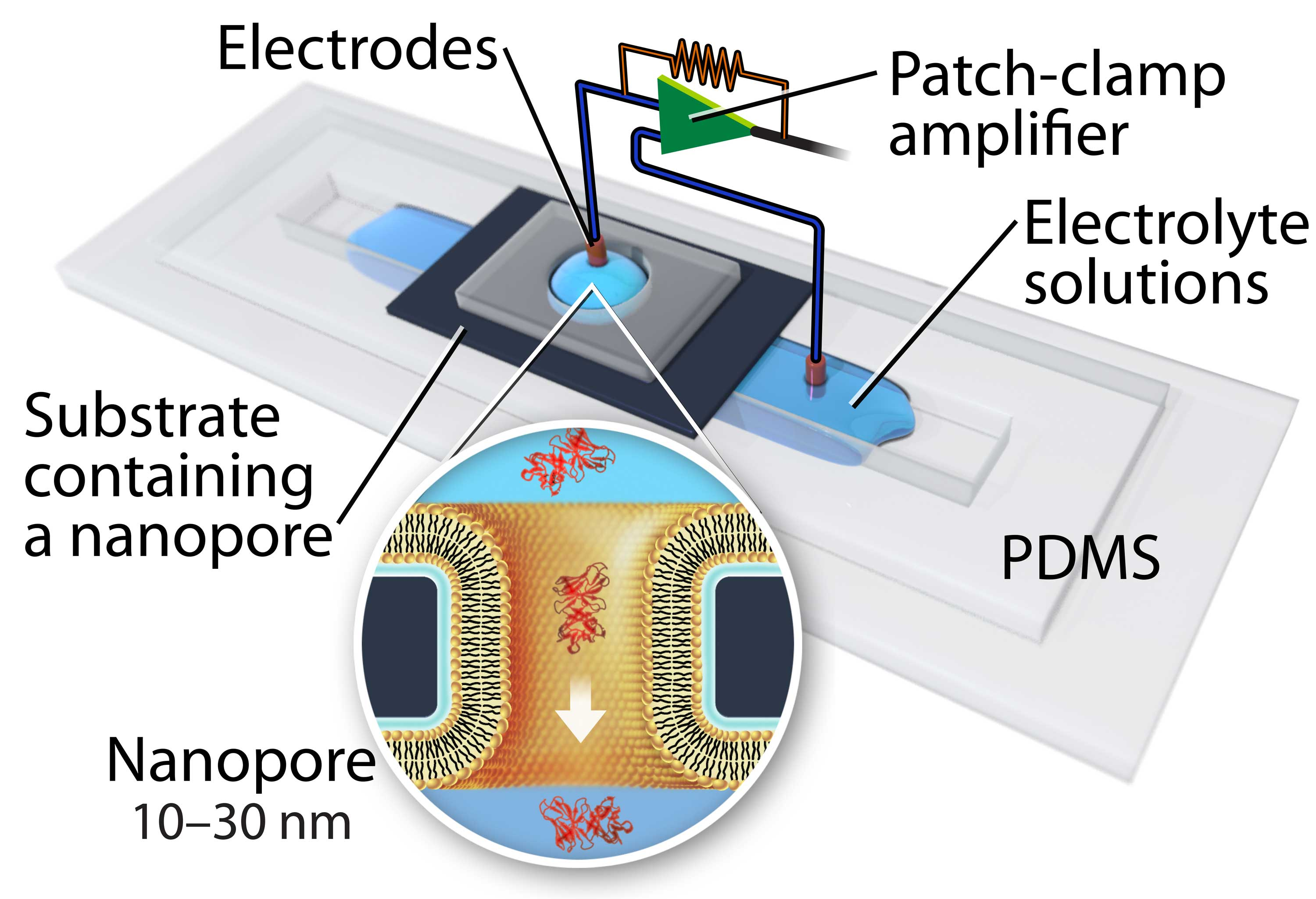 This illustration depicts the device used to measure individual protein. The inset shows proteins (in red) flowing through a nanopore.