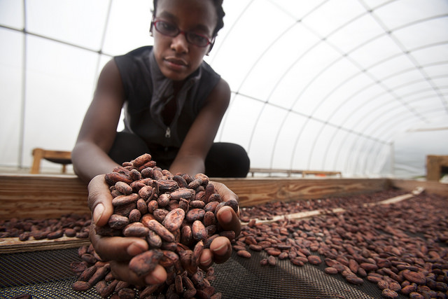 Corinne Joachim-Sanon, founder of the Askanya Chocolate Factory sifts through the dry beans in the drying facility outside of Ouanaminthe. Image credit: Marcin Szczepanski