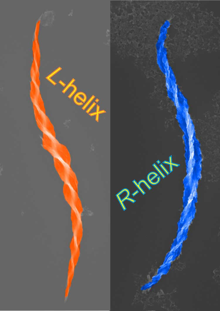 Colorized electron microscope images of a right-handed helix and a left-handed helix. Image credit: Wenchun Feng, Kotov Lab
