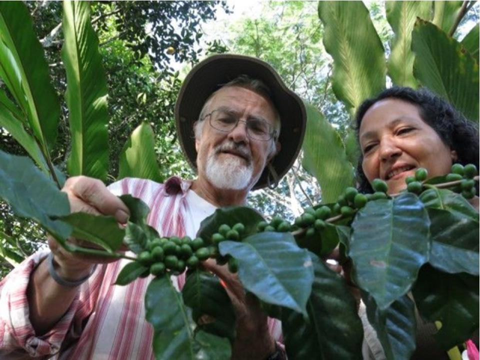 Dr. Ivette Perfecto and Dr. John Vandermeer inspecting organisms on coffee leafs at Sierra Madre de Chiapas
