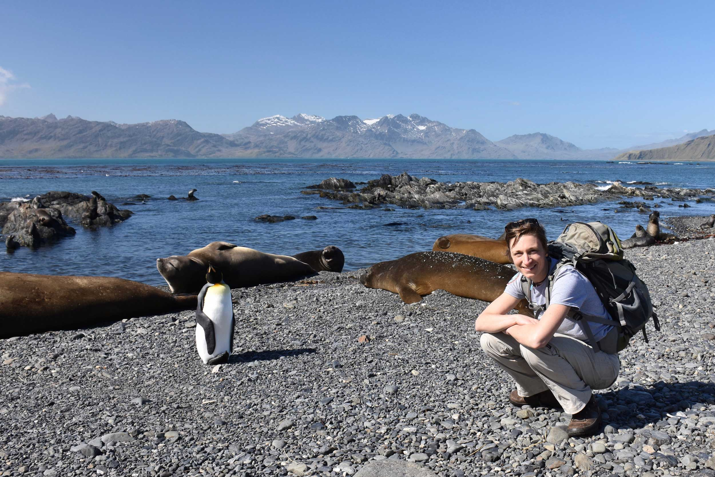 U-M microbiologist Melissa Duhaime on a beach on South Georgia Island with a king penguin and seals. Image credit: Maria Tsukernik