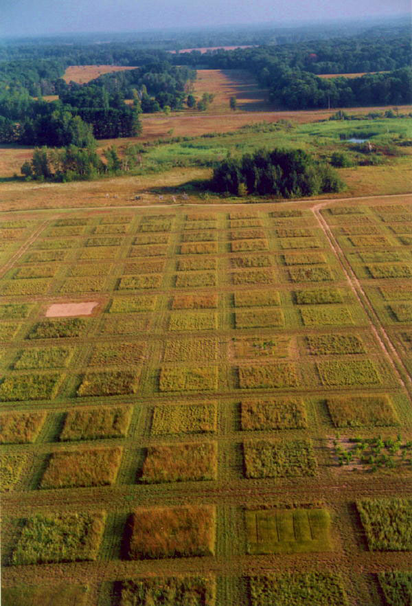 Experiments like the one set-up here in a North American prairie have suggested that when species diversity declines, an ecosystem tends to become less productive. (photo credit: David Tilman)