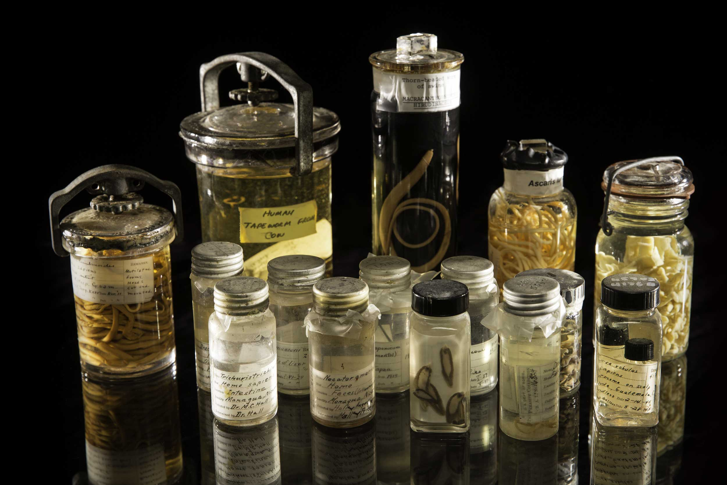An assortment of specimens from the Smithsonian's National Parasite Collection at the National Museum of Natural History. The National Parasite Collection holds more than 20 million parasite specimens in connection with information about their geographic distribution and host animals. Image credit: Paul Fetters for the Smithsonian Institution