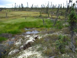 Forested permafrost degrading in Alaska leaving behind carbon-emitting wetlands. Image credit: Jennifer Harden