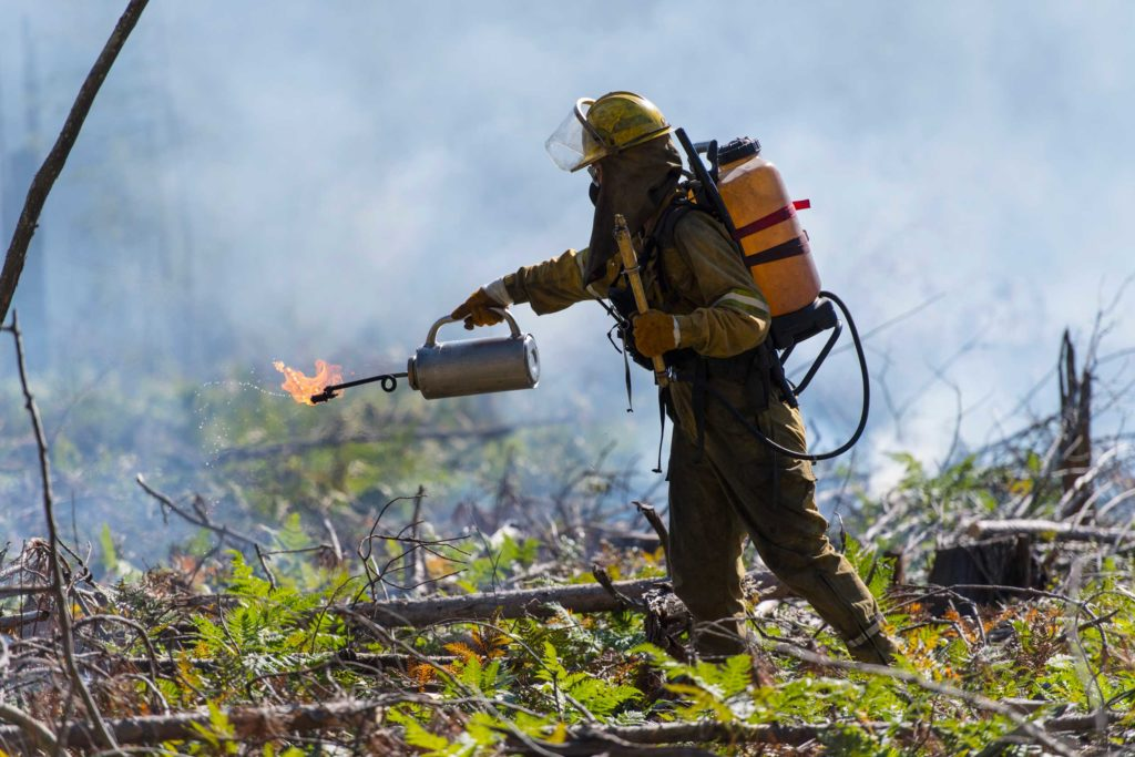 The fire crew used drip torches containing a mix of diesel fuel and gasoline to ignite dead branches and ground cover. The newly added burn plot is the sixth in a long-running experiment that began in 1936. Image credit: Roger Hart, Michigan Photography