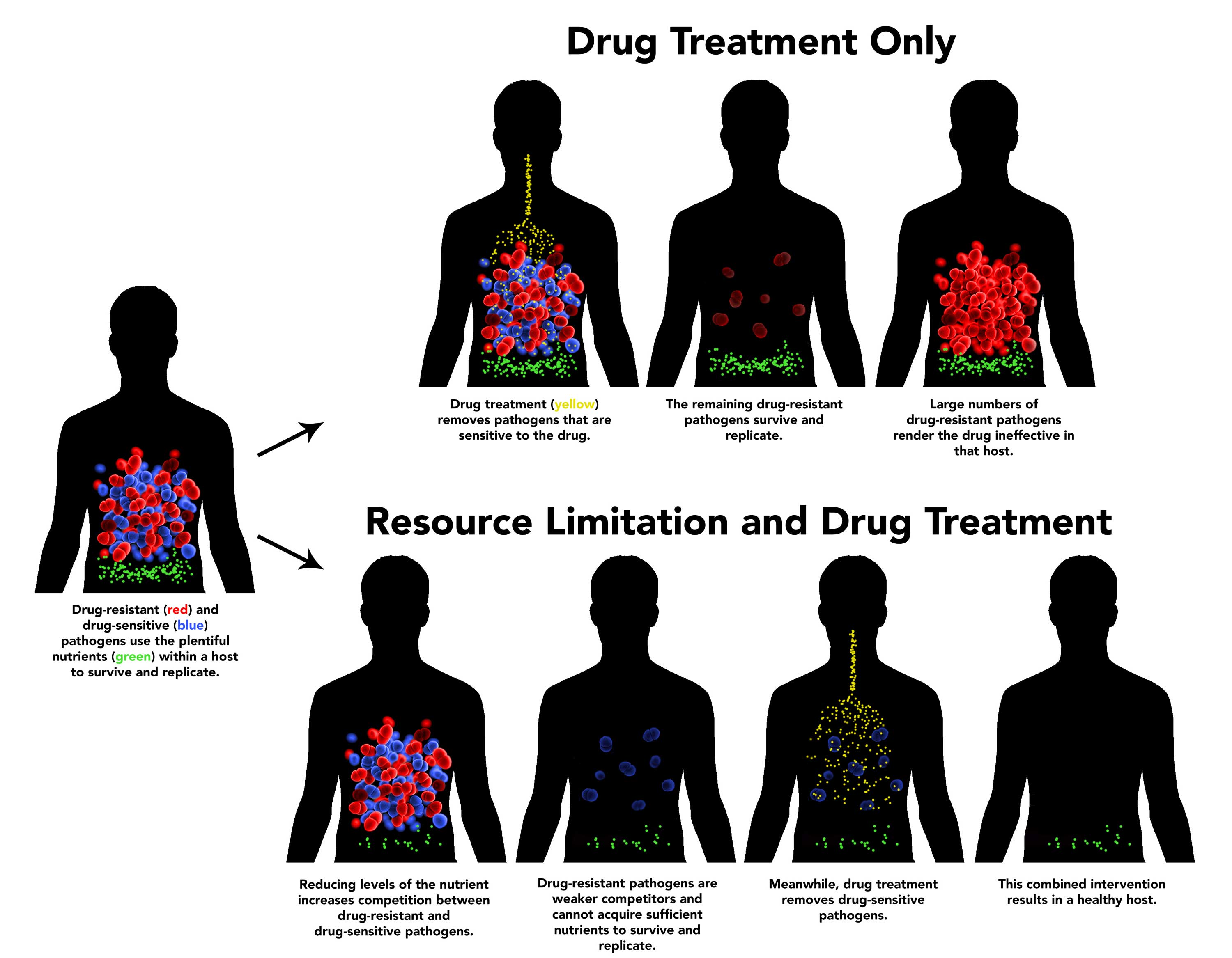 Infographic showing differences between drug treatment only and resource limitation and drug treatment. Image credit: Nathan Follmer, Penn State