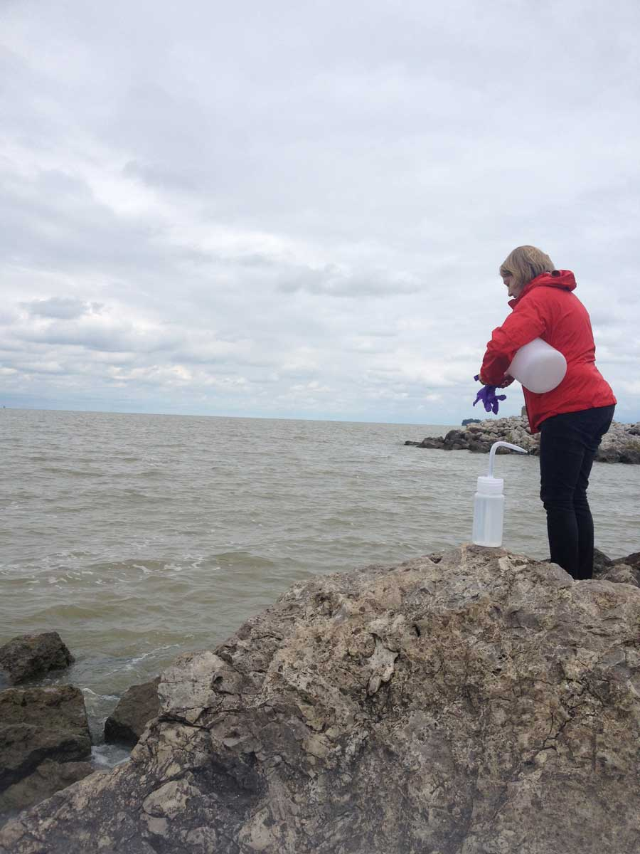 Jessica Axson prepares to collect a freshwater sample from Lake Erie at Maumee Bay State Park in Ohio. The cloudy green tint in the water is due in part to the high concentration of blue-green algae—84 parts per billion—that has caused large harmful algal blooms in the western basin of Lake Erie. Image credit: Nathaniel May