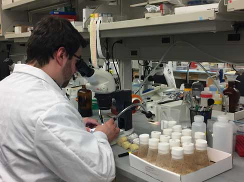 Jon Nelson, a researcher in Yukiko Yamashita's group, uses fruit flies (in flasks at right) to study the role of rDNA in aging. Image credit: Yukiko Yamashita