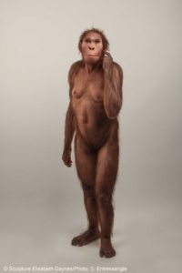Life-size sculptural reconstruction of Australopithecus sediba, an extinct human relative that roamed southern Africa 2 million years ago. The one-of-a-kind reconstruction was commissioned by the University of Michigan Museum of Natural History and was created by the Daynès Studio in Paris. Image credit: © Sculpture Elisabeth Daynès/Photo: S. Entressangle