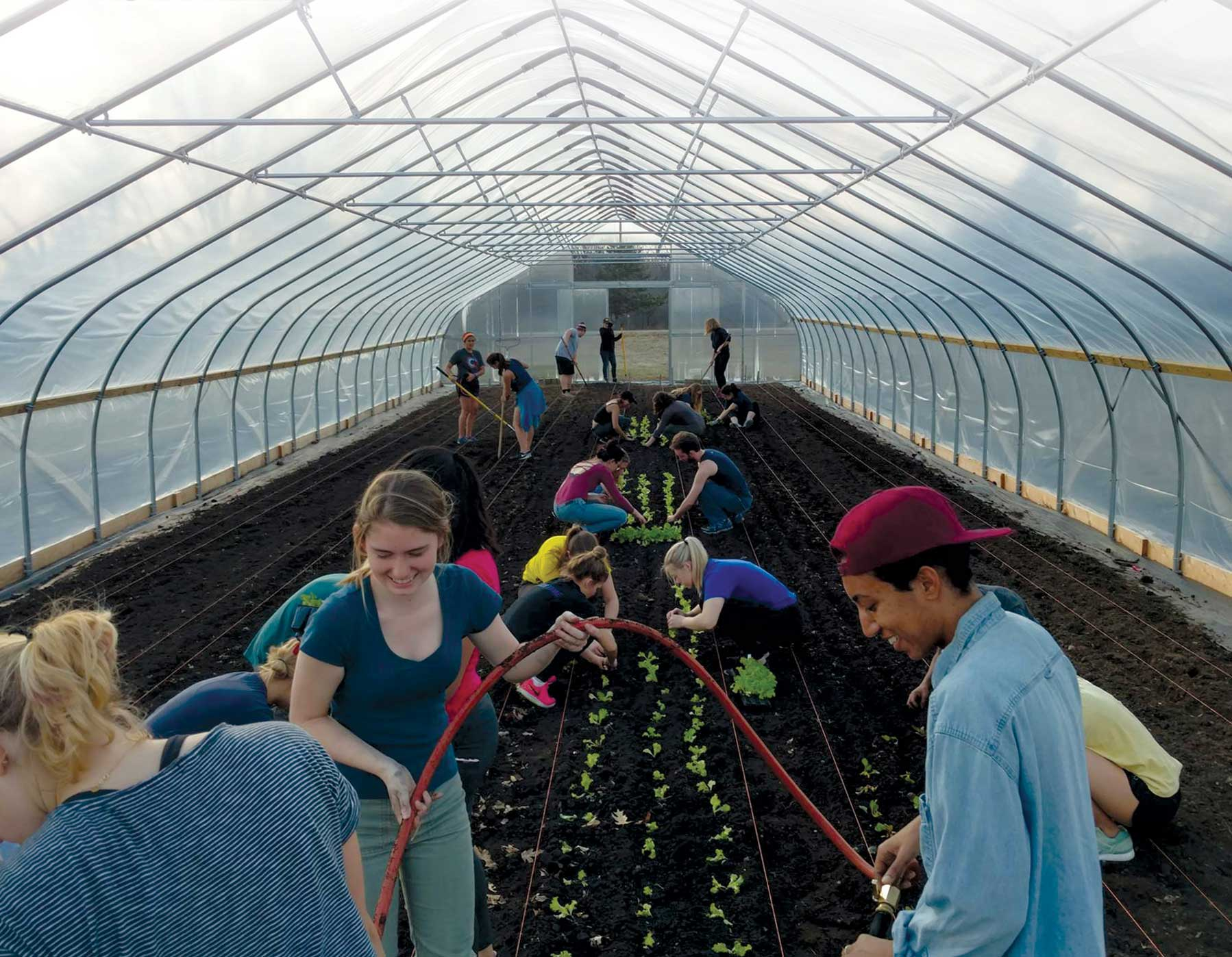 Students plant seedlings in a greenhouse. Image courtesy: Planet Blue