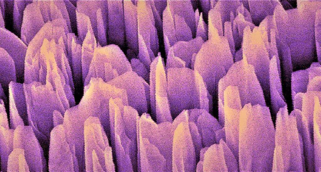 The colorized electron microscope image shows the gallium nitride towers of the artificial photosynthesis device at 52.5k magnification. These nanostructures rip water molecules apart into hydrogen and oxygen to produce clean hydrogen fuel. Image credit: Faqrul A. Chowdhury, McGill University
