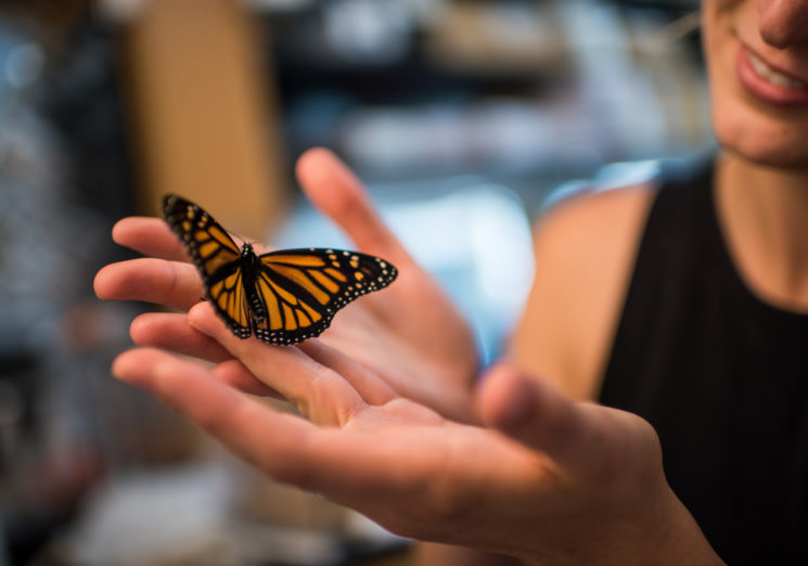 Researcher Leslie Decker with a monarch butterfly in a University of Michigan laboratory. Photo by Austin Thomason/Michigan Photography.