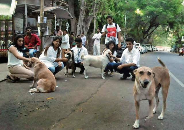 Street dogs in India that inspired U-M Stamps professor Nick Tobier to create a collection of illustrations and sketches.